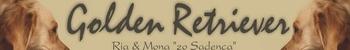 Golden retriever Ria a Mona